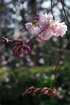 japanese_gardens.01