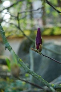 japanese_gardens.08
